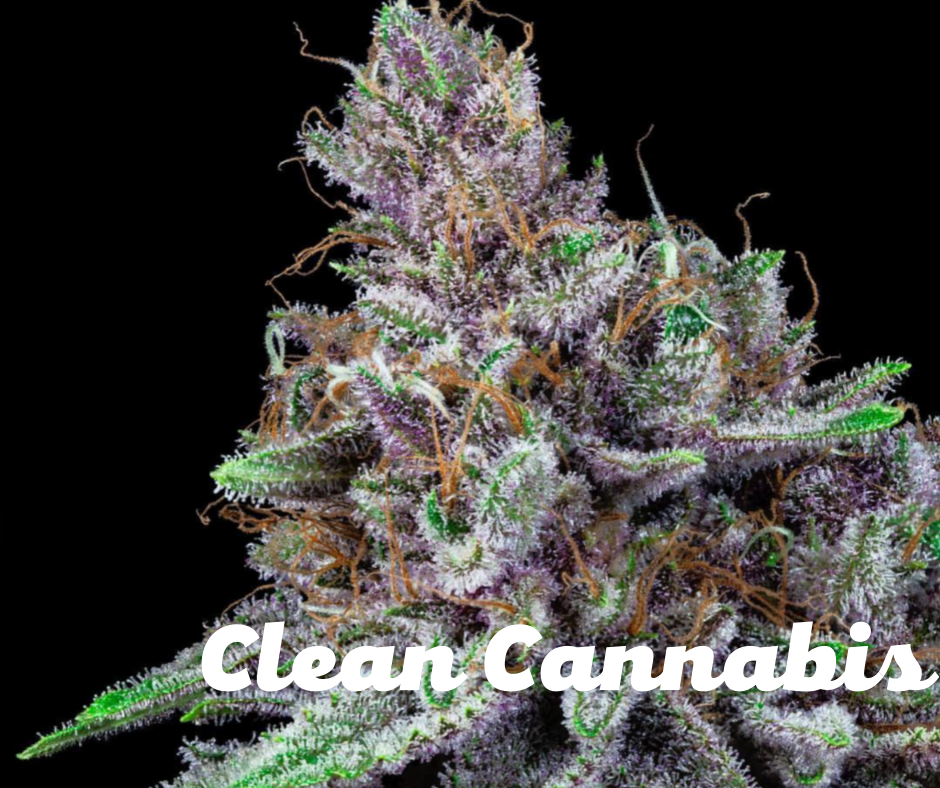 Clean cannabis from clean green certified cannabis farms