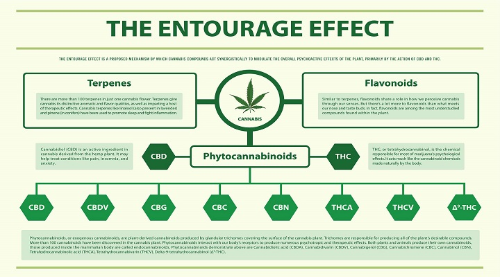 entourage effect from weed THC, CBD, and other cannabinoids, terpenes has benefits